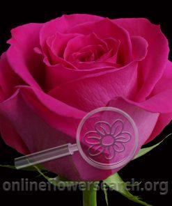Rose Topaz