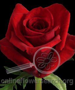 Rose Finally