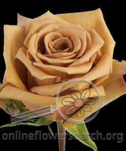 Rose Toffee-BB