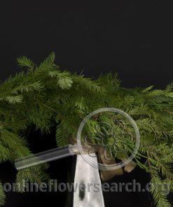 Cedar/Douglas Roping