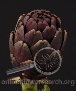 Artichoke Chocolate
