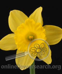 Type: Focal flower Archives - Page 10 of 45 - Online Flower Search