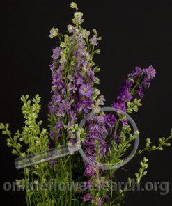 Larkspur Lavender