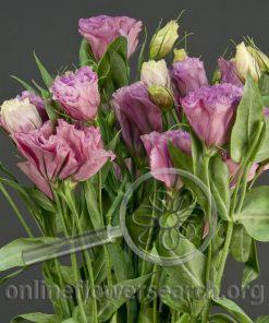 Lisianthus Dark Pink