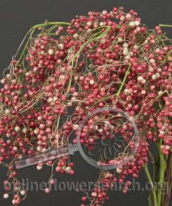 Pepperberry Leafless