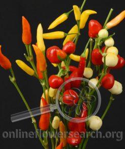 Pepper Ornamental Mix