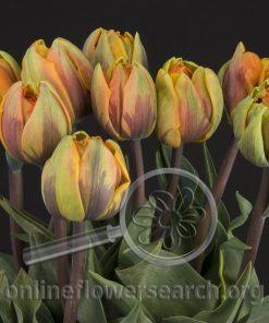 Tulip Orange Double