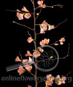 Quince Peach