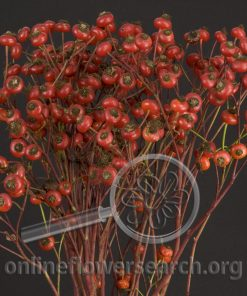 Rosehips Red