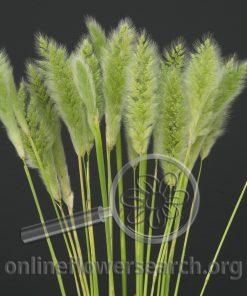 Grass Rabbit Tail