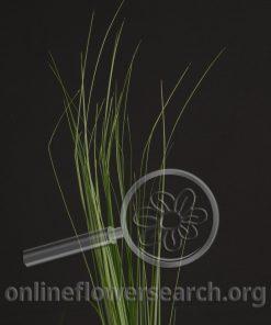 Grass Steel