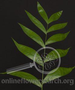 Jade Foliage