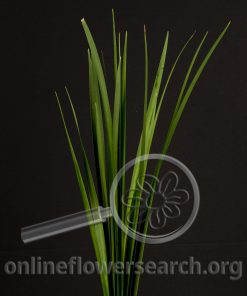 Jungle Grass