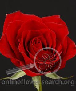 Rose Charlene