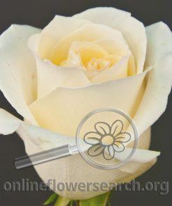 Rose Andean Crystal