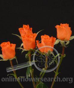 Spray Rose Alegria