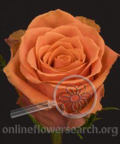 Rose Milonga