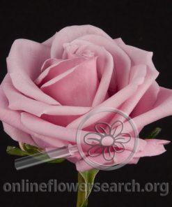 Rose Keano