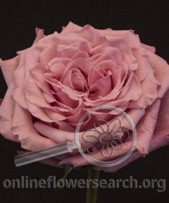 Rose Art Deco