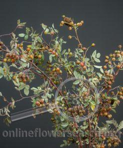 Rosehips Rubrifolia