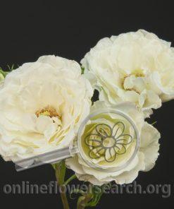 Spray Rose Carla Romantica