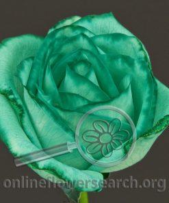Rose Tinted - Green