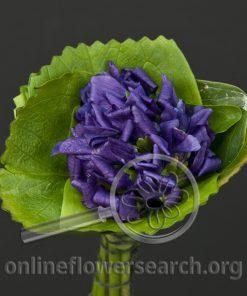 Violets France