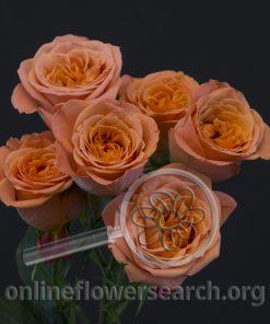 Spray Rose 4-Good Peach+