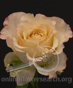 Rose Allyson