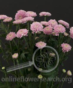 Pompon Santini Fleurelles Pink