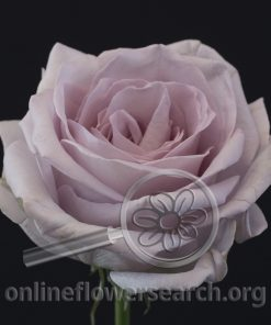 Rose Bounty Way