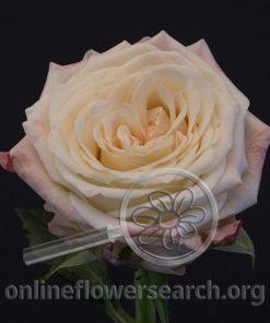 Rose Eden