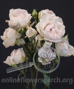 Spray Rose Brides Bouquet