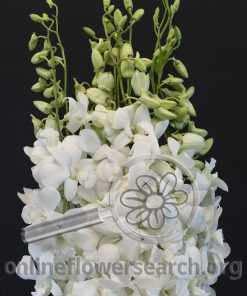 Dendrobium Aroon white