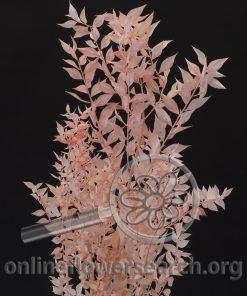 Dried Bleached Italian Ruscus Coral