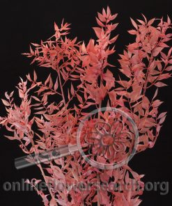 Dried Bleached Italian Ruscus Flamingo