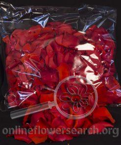 Rose Petals - Orange