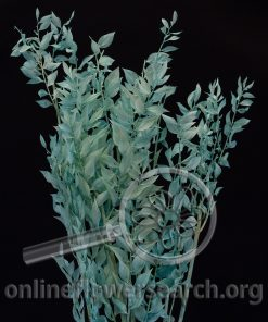 Dried Bleached Italian Ruscus Tiffany