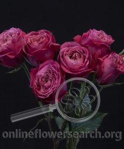 Spray Rose Domino