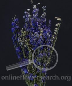 Dried Natural Delphinium